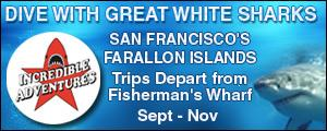 Dive with Great White Sharks in San Francisco's Farallon Islands. Trips depart from Fisherman's Wharf September to November