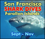 San Francisco SHARK DIVES in the Farallon Islands