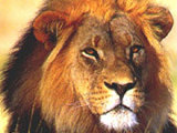 Wild Thing, South Africa: Adventure Travel, Wildlife Safaris, Diving, Climbing,  :  travel africa adventure safaris