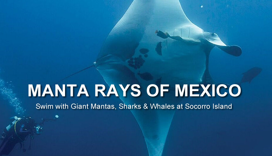 Dive with Great White Sharks in Isla Guadalupe Mexico