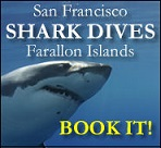 Book your great white shark adventure with Incredible Adventures