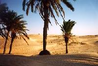 Beaautiful and exotic oasis in the Tunisian Sahara