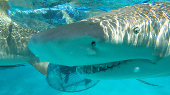Up close and personal - the View from the Shark Cage