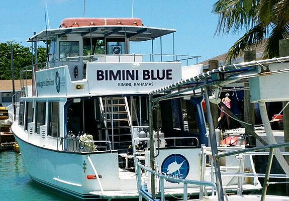 Shark diving boat Bimini Blue at the dock