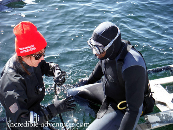 Cagediving the Farallons
