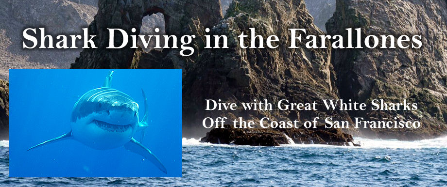 Shark Diving in the Farallons