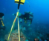 Coral research & reef preservation