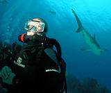 Shark Diving with Rebreather