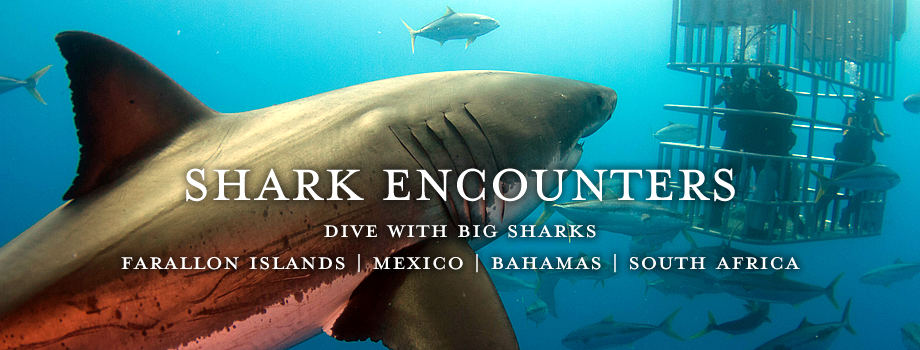 Dive with Big Sharks in the Farallon Islands, Mexico, Bahamas & South Africa