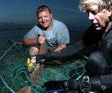 Shark tagging for shark research