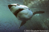Incredible Shark Diving Adventures