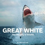 Great White by Chris Fallows