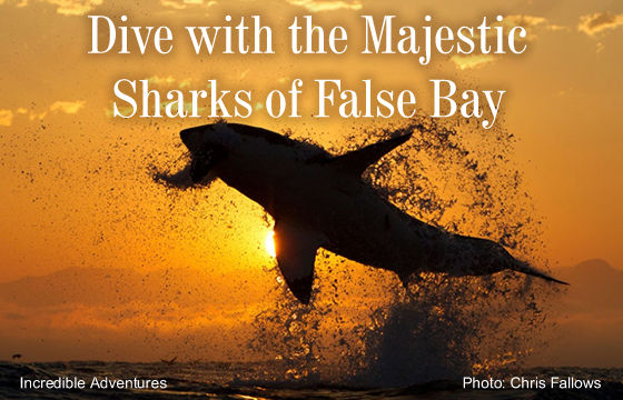Cagediving - Dive with the Majestic Sharks of False Bay, South Africa