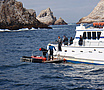 Shark Diving in the Farallon Islands off San Francisco