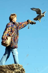 Experience the thrill of  Russian Falconry